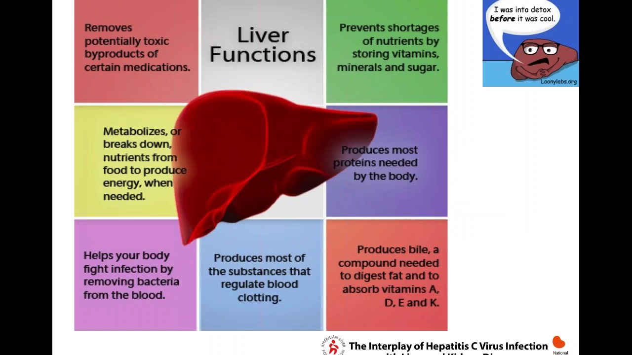 The Interplay of Hepatitis C Virus Infection with Liver and Kidney Disease