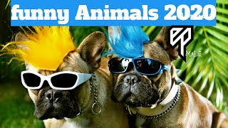 funny animal videos(2020)- try not to laugh