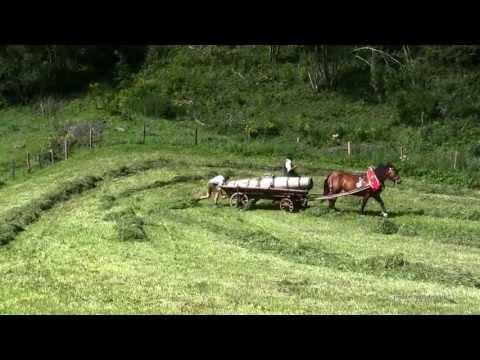 Traditional haymaking austria with horses Traditionelle Heuernte Österreich mit Pferden