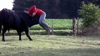Un taureau de corrida encorne un homme . . . . ? Mais non il joue avec lui.