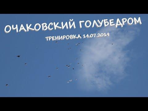 Очаковский голубедром. Тренировка голубей 14.07.2019