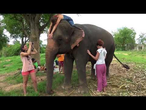 """(2ème partie) """"L'APPEL DES ELEPHANTS, vos témoignages"""""""