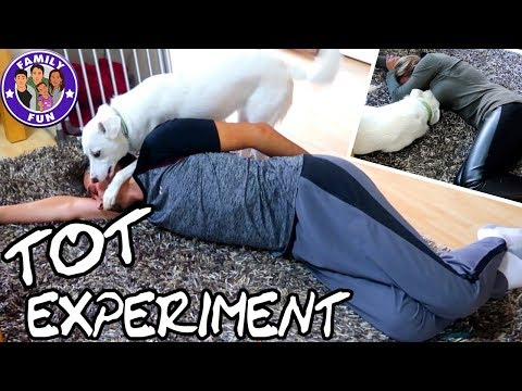 ICH STELLE MICH TOT! REAKTION EINES HUNDES! KRASSES EXPERIMENT   FAMILY FUN