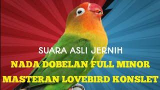 Download Lagu MASTERAN DOBELAN LOVEBIRD KONSLET NGEKEK MINOR TANPA JEDA mp3