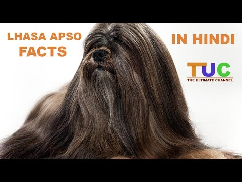 Lhasa Apso Dog Facts In Hindi | Dog Facts | Popular Dogs | The Ultimate Channel