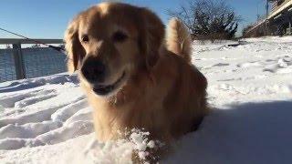 Kopi Running In Super Snow-Mo!