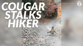 Viral video shows cougar stalking Utah hiker in terrifying 6-minute encounter