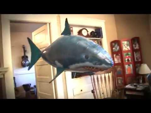 Cá Bay Điều Khiển Từ Xa - http://quatang1102.com