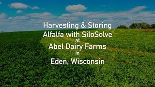 Harvesting & Storing Alfalfa with SiloSolve - Abel Dairy Farms