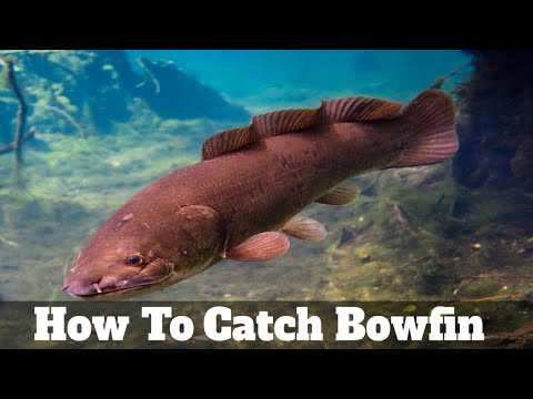 How To Catch & Fish For Bowfin (Grinnell, Swamp Trout, Mudfish, Freshwater Dogfish, Choupique)
