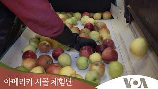 [아메리카 시골 체험단] 사과주스 담그는 마을