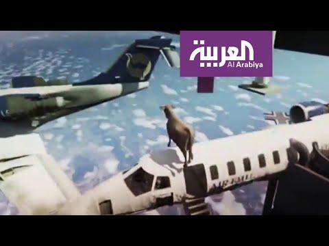 تفاعلكم | قناة عالمية تسخر من الأبقار الطائرة في قطر  - نشر قبل 4 ساعة