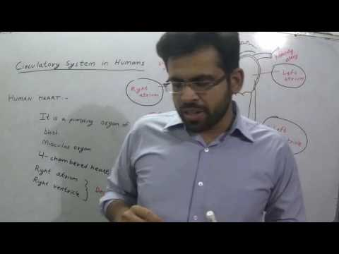 HUMAN CIRCULATORY SYSTEM GENERAL SCIENCE BIOLOGY  SESSION 8   FOR SSC CGL CHSL GOVERNMENT JOB CLAT