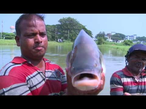 Fisheries For Small Farmer