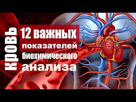 Биохимический анализ крови - расшифровка показателей, которые должны знать все