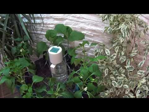 Видео Капельный полива растений из пластиковых бутылок