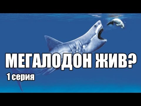 Мегалодон - акула, которая еще жива? (1 серия) | Интересные факты