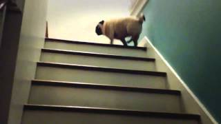 Magic Pug - The Stairs Are Lava