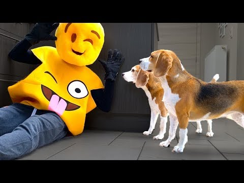Funny Dogs Surprised with Giant Emoji : Funny Dogs Louie and Marie