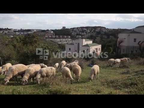 DESTRUCTION OF NATURE IN TURKEY RBZRPCWEX