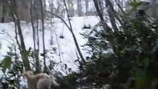 山の中から聞こえてくるれぴ(サルーキ)の声! 声のする方へ行ってみる...