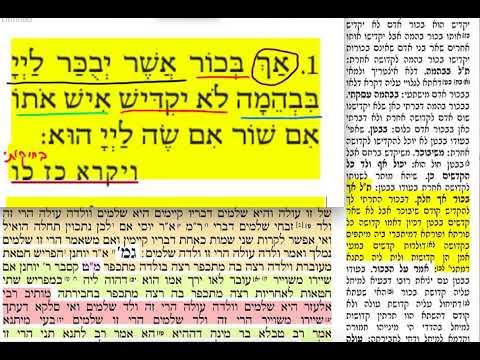 דף יומי מסכת תמורה דף כה Temurah daf 25