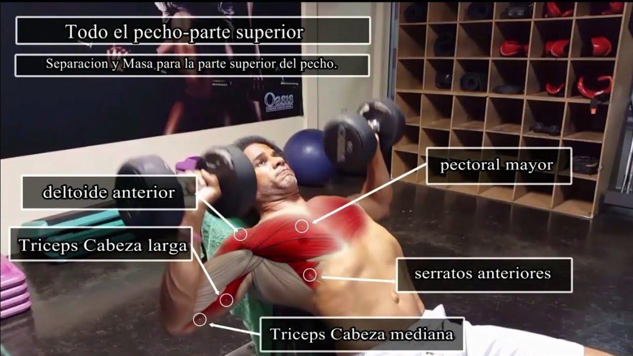 Anatomía del ejercicio/ Rutina de Pecho ¿No te crecen los pectorales ...