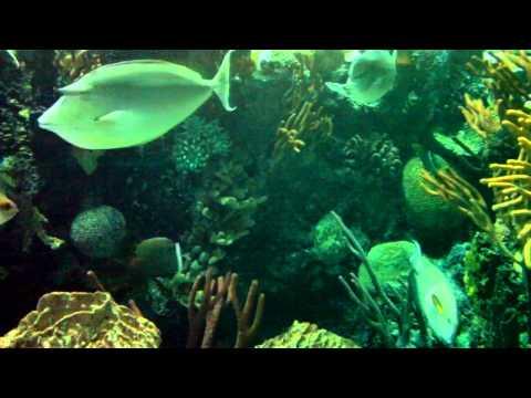 Видео Golden reef casino online