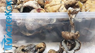 Сушка белых грибов в домашних условиях | Сушка білих грибів