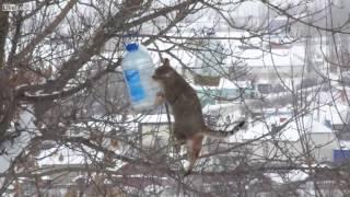 Cat steals birds' food!