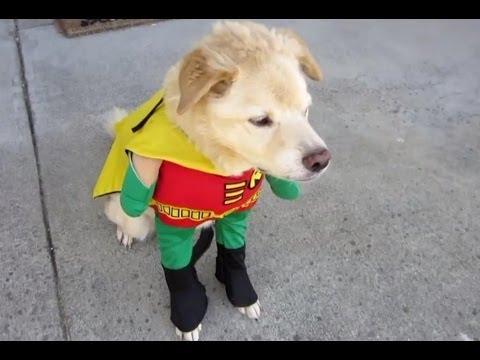 Смешные собаки в костюмах. Подборка Топ 7