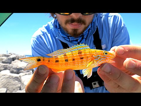 Easy way to catch saltwater fish youtube for Fishing for beginners