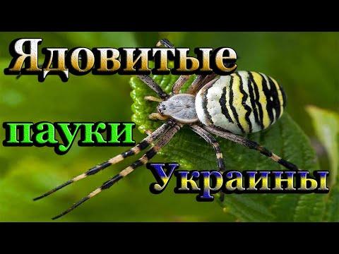 Вопрос: Сколько видов пауков в Республике Беларусь?