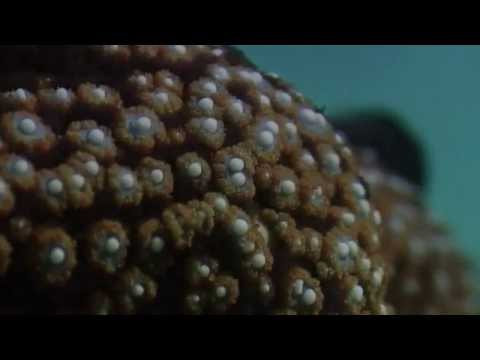 Echinoderms Sea Star Time lapse  Eating Mussel