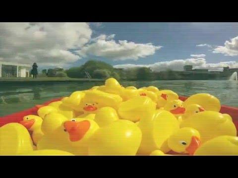 60 Yellow Ducks in UCD Lake #OperationCreativeChange