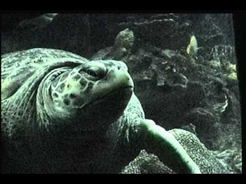 Aquarium Boston,USA-Atlantic Wind studio film.avi