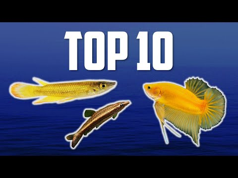 10 Top Dwelling Fish For Your Aquarium
