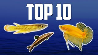 10 Top Dwelling Fish for Your …