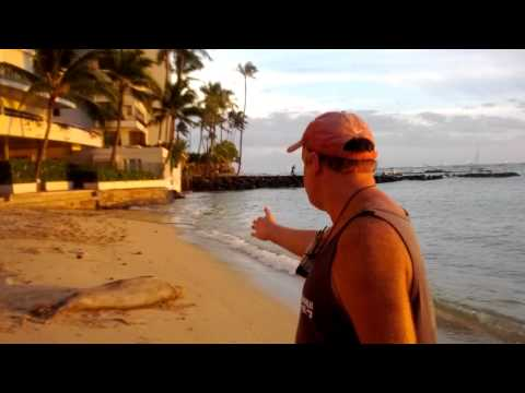 HAWAII MEETING A MONK SEAL ON THE BEACH