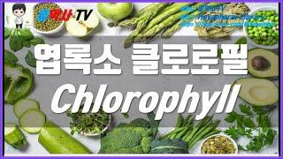 엽록소 클로로필 Chlorophyll 효능, 부작용, …