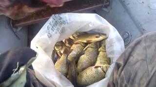 Красный карась на сети   (Russian fishing )  май 2017
