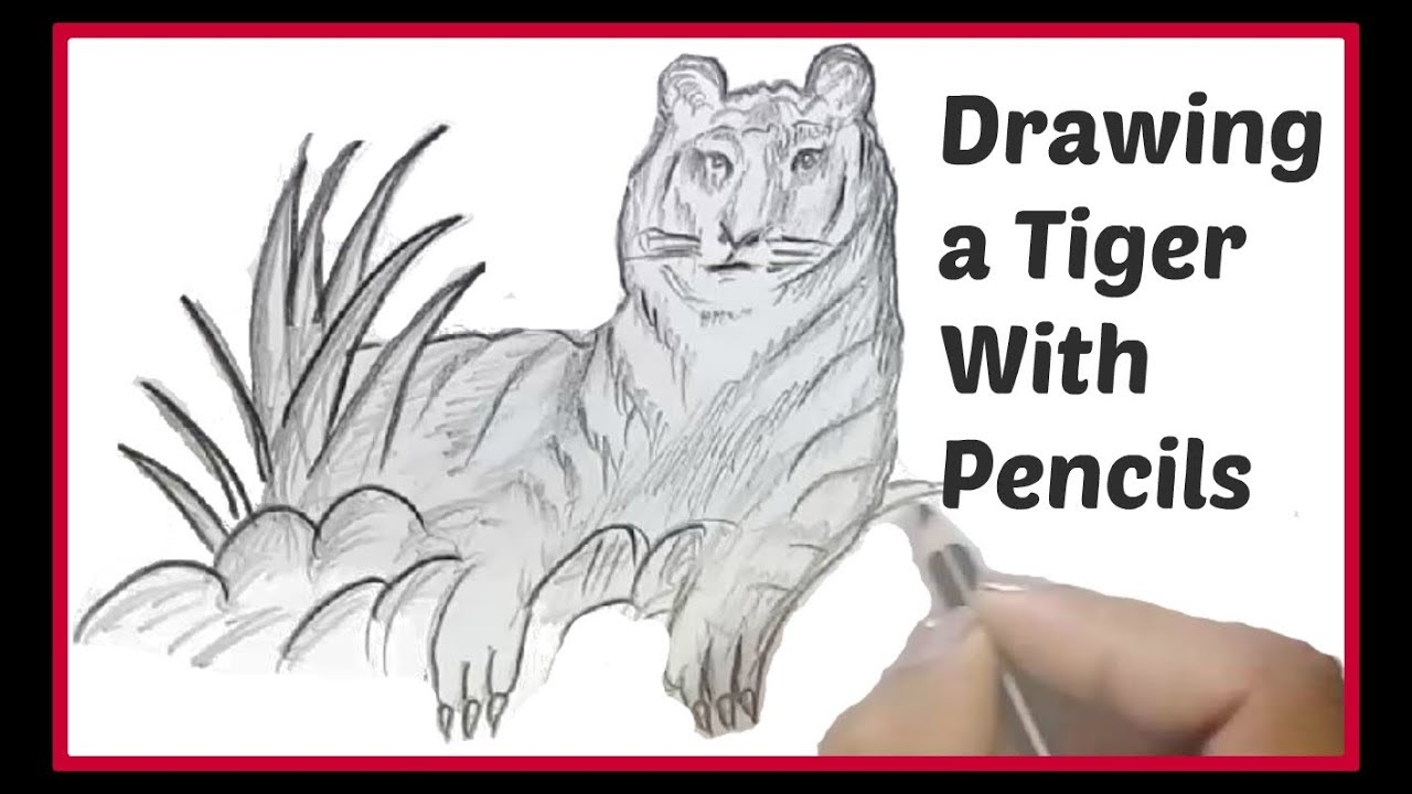 Simple Pencil Drawing For Kids Drawing A Tiger Easy Fast