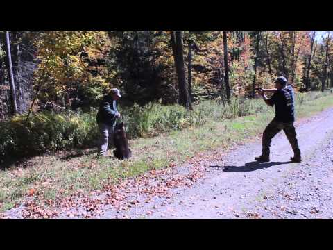 Wrong German Shepherd end Wrong Guy for a Crazy guy with a knife