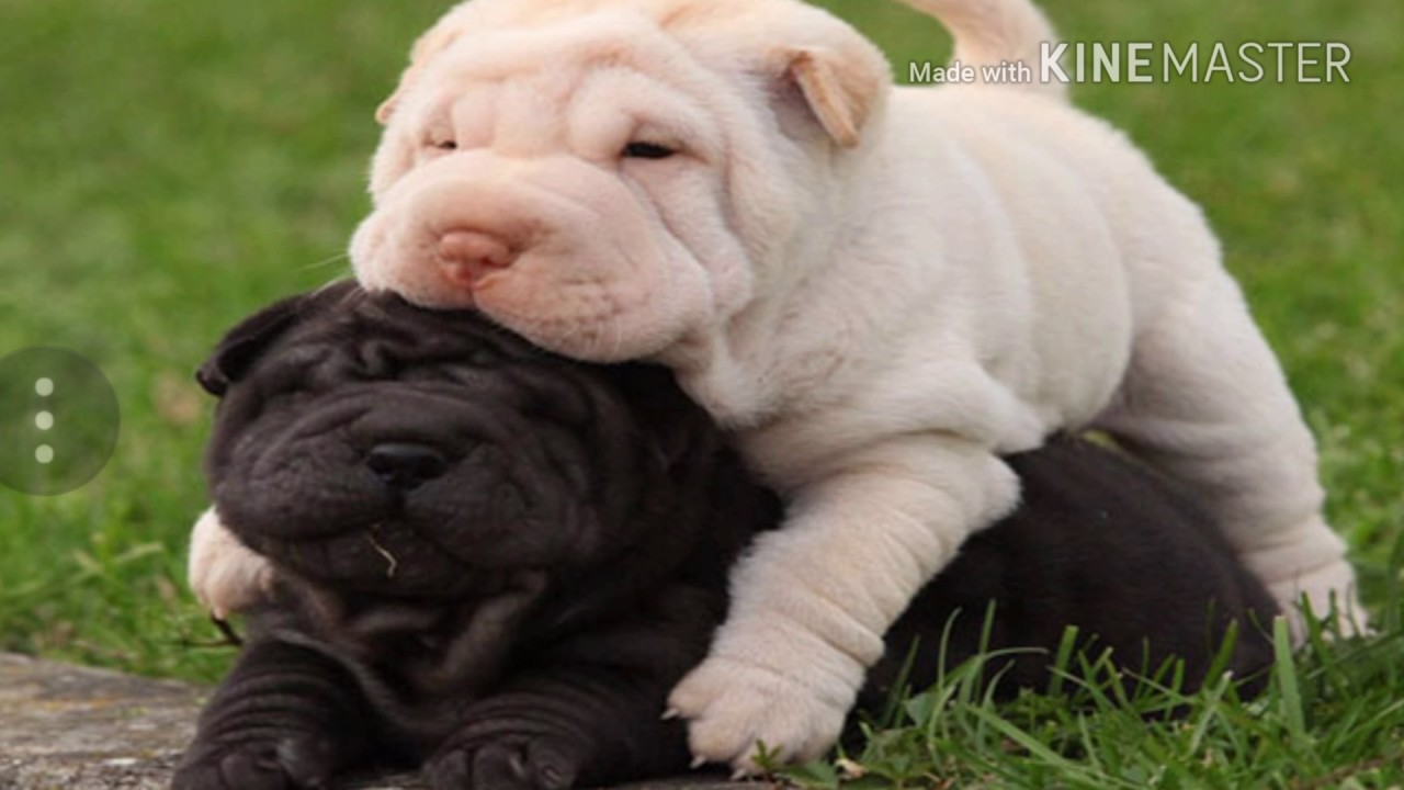 I 16 cani pi belli del mondo youtube - I mobili piu belli del mondo ...