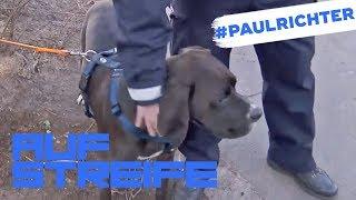 Hilfloser Hund in Gefahr! Warum rastet der Besitzer aus? | #PaulRichterTag | Auf Streife | SAT.1 TV