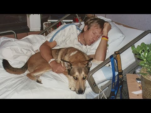 This Dog Refused to Leave His Owners Hospital Bed  Their Journey and Friendship Made Us Cry