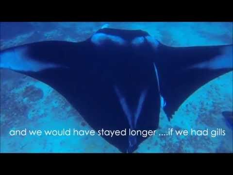 Video Of The Week | Manta Rescue!