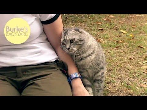 Burke's Backyard, Cat Behaviour Part 3 - Marking