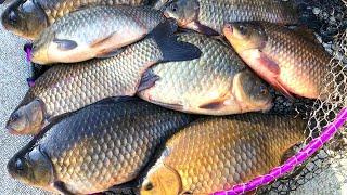 Это не рыбалка а праздник Дикие караси монстры клюют по два сразу Ловля карася в декабре