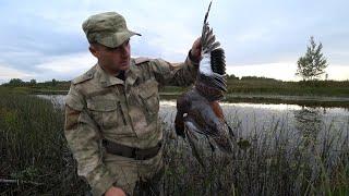 ОХОТА НА УТКУ С ПОДХОДА ОСЕНЬЮ Такой расцветки утку редко встретишь в это время Охота в Коми